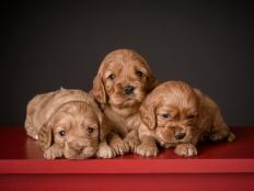 3 reds (1)