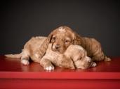 Butterscotch & Ginger (1)