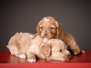 Butterscotch & Ginger (3)
