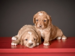 Butterscotch & Ginger (4)