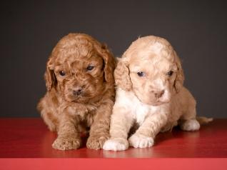 Chai & Ruby (1)