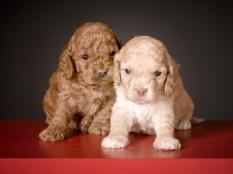 Chai & Ruby (2)