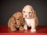 Chai & Ruby (3)