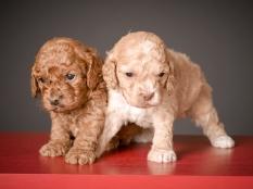 Chai & Ruby (4)