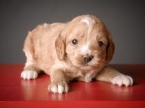 Ginger (2)