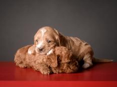 Ginger & Ruby (1)
