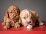 Ginger & Ruby (2)