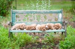 litter on a bench (1)