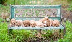 litter on a bench (2)