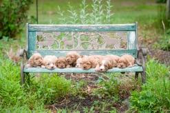 litter on a bench (3)
